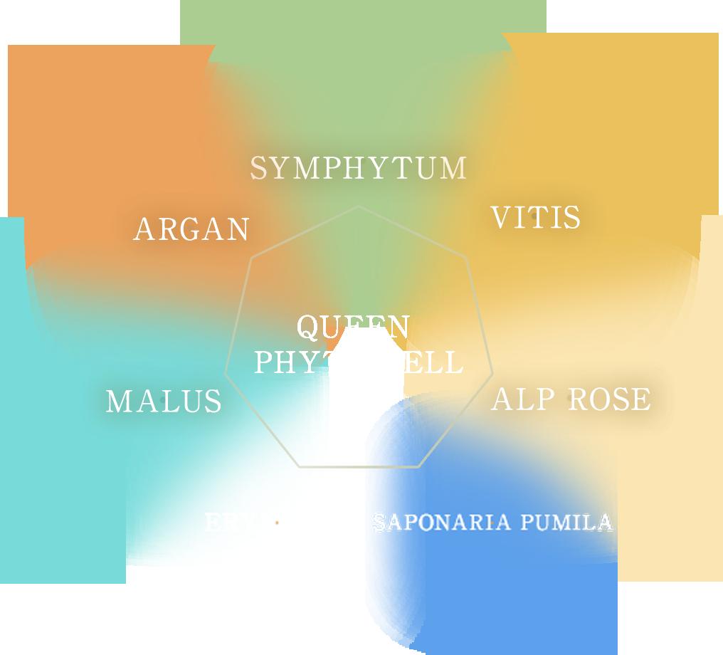 植物幹細胞を8種配合。植物の有効成分を科学し植物の幹細胞を培養・処方することが大変注目されています。(腐らないリンゴの細胞エキス等)アコライムにはリンゴ培養細胞から得られたエキスだけではなく合計8種(クィーンフィトセル、不死の花、サポナリアプミラ細胞の幹細胞を含む)の植物細胞を安定処方し美容業界でもっとも重要視されている幹細胞を守り育てることによる総合エイジングケアを目指しています。さらにELP.Laboとの研究を推し進め、化粧品原料(INCI登録)を目指しています。細胞を培養できる技術力。その技術力こそACCLAIMの品質を牽引しています。 →植物幹細胞について詳しくはこちら→培養技術を有さず化粧品原料を微量添加しただけの模倣品、コピー品(化粧品)について、弊社は何ら技術提供はしておりません。ご注意いただけますようお願い申し上げます。※2013.10 弊社調べ
